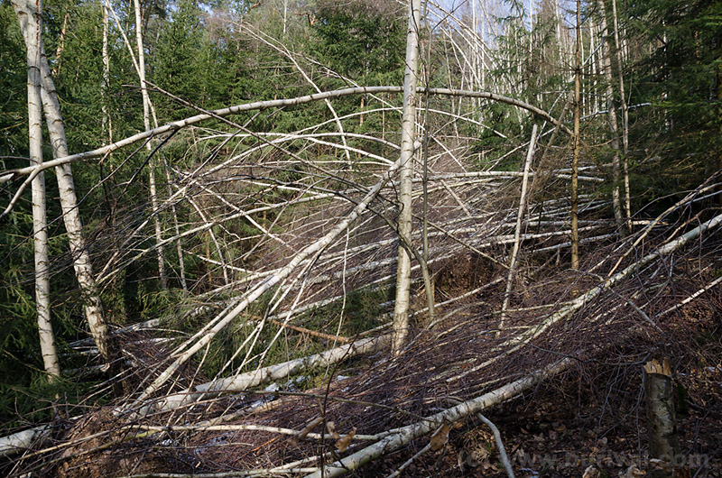 forest damaged by the wind storm