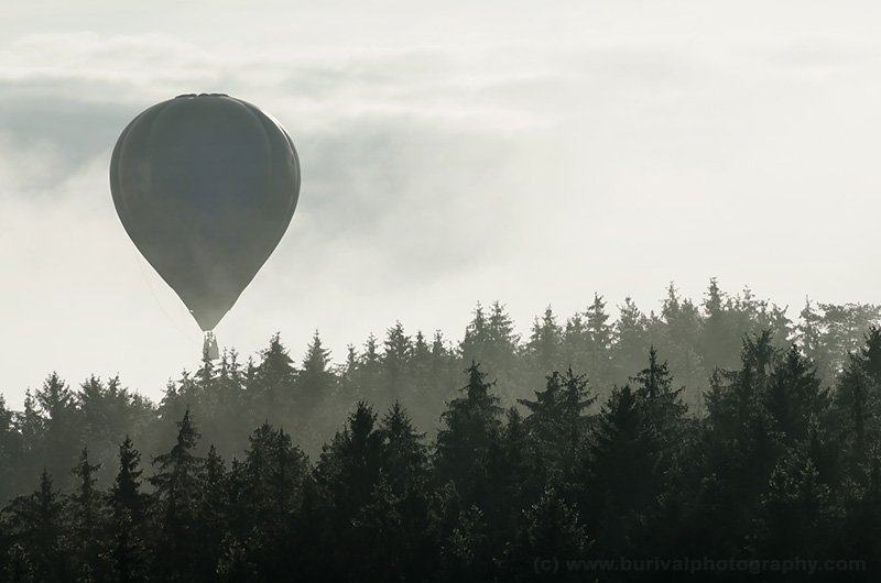 balloon-and-forest