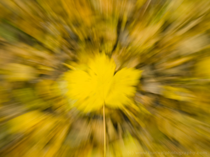 Abstract autumn foliage background