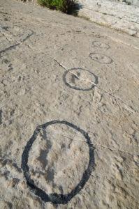 dino-tracks