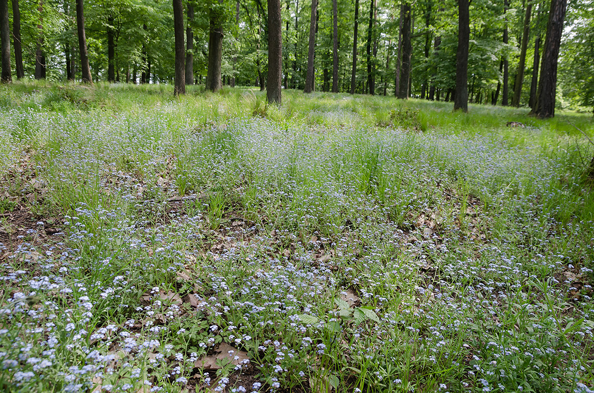 Spring forest in bloom