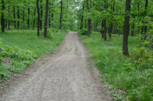 Spring forest with path